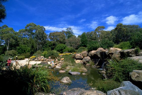 The Aussie Gardens | Australian National Botanic Gardens Reviews and Guide in Australia 91