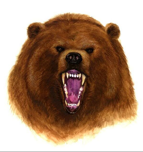 Angry Brown Bear Tattoo Design