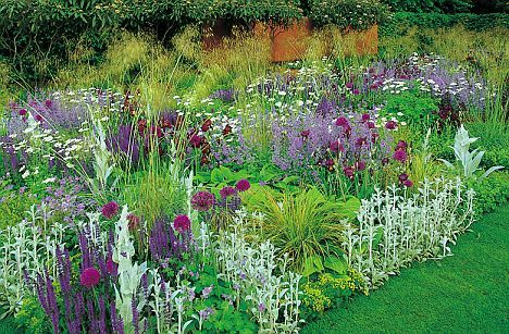 Google perennials and flower plants on pinterest for Planting schemes with grasses
