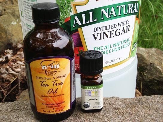 Repelente de pulgas para perros: medio litro de vinagre, medio litro de agua, 25 gotas de aceite de árbol de té y 25 gotas de aceite de lavanda, todo mezclado, y con atomizador.