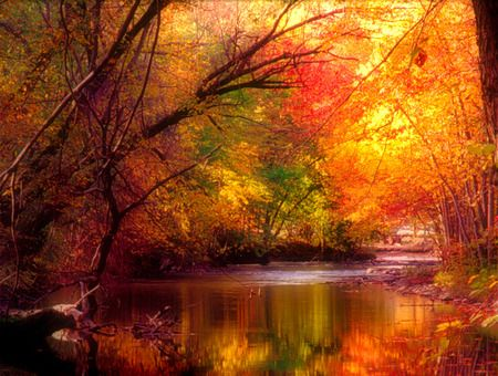Four seasons - Autumn, Colorful, Trees
