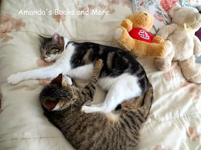 Amanda's Books and More: Sleeping Cats at http://abooksandmore.blogspot.com/2013/12/picture-perfect-party-linky-68.html
