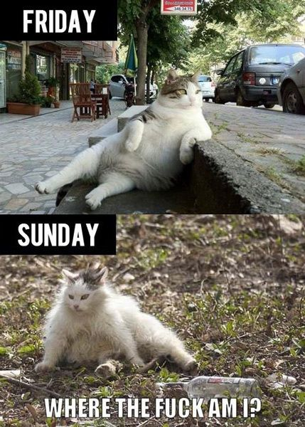 funny photos, funny cat, drunk...