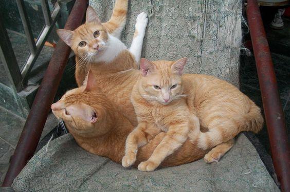 Família reunida - Pipo José, Pipico José e Pitico José (pai e filhos) - 11 meses