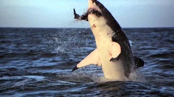 Ataque de Tubarões - Cenas Incríveis 3