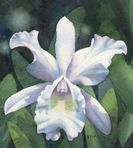 """""""THE FAIREST WHITE watercolor orchid floral painting"""" - Original Fine Art for Sale - © Barbara Fox"""
