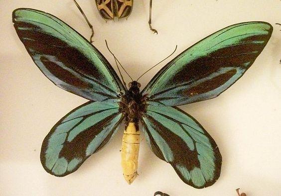 Plus gros insectes au monde