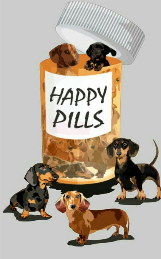 Dachshunds Dogs Are Like The Happy Pills Doglovers Happy