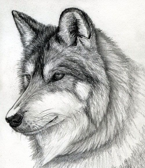 Learn To Draw A 3d Glass Dessin De Chien Croquis De Loup Loup