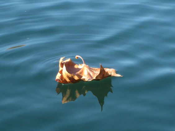 Floating leaf - fall day at the quarry