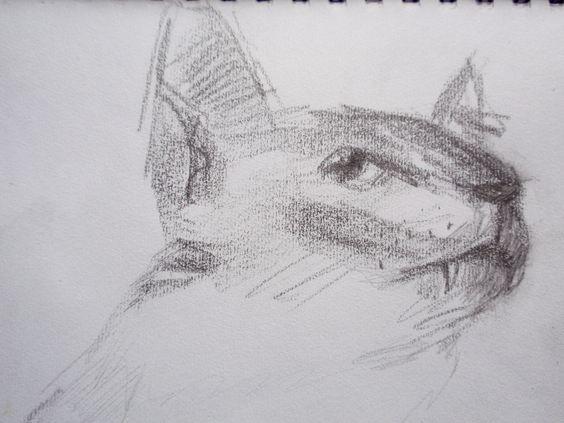 My cat, Freddy, drawing