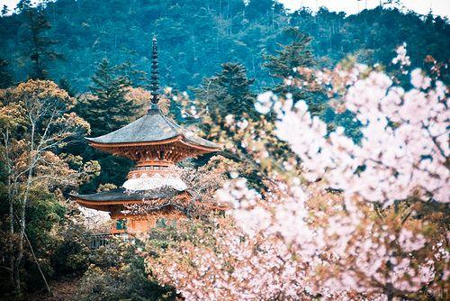 Japón 2010. Miyayima