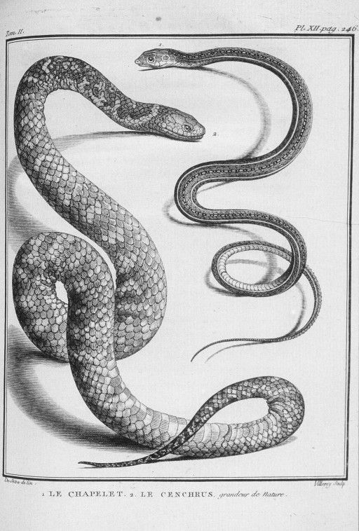 drawing of snakes  2