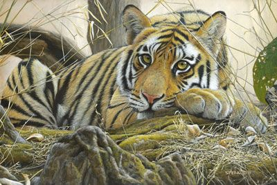 Edward Spera - Wildlife Artist - Painting Originals