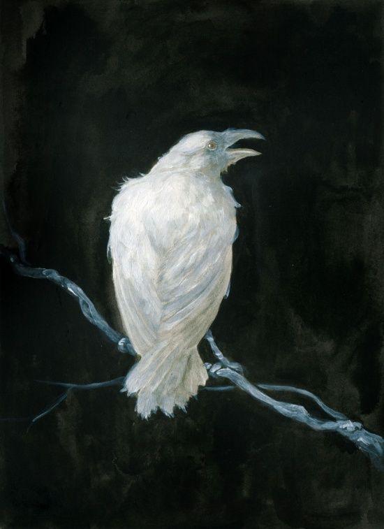 STUNNING White Raven!!! by Jana Heidersdorf