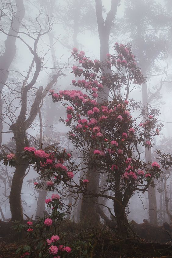 Fighting through the forest fog, Nepal by Dmitry Kupratsevich: