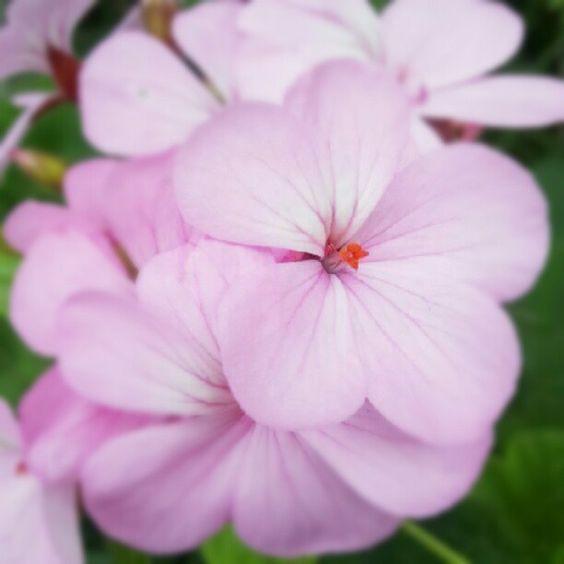 今日もたくさんの花とたくさんの笑顔が咲きますように。