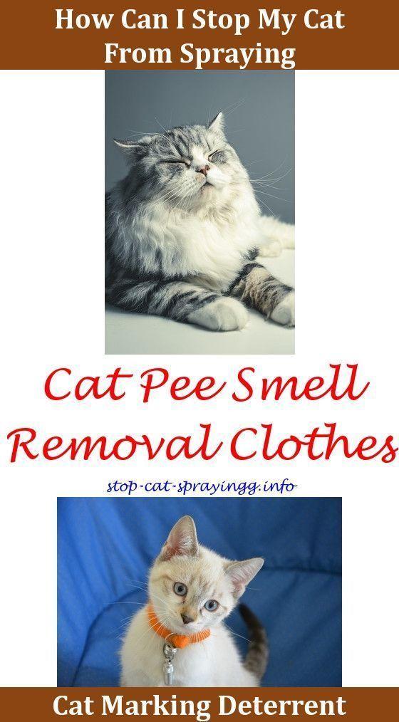 83a91c80ba84010b87ab794ba04a1e64 - How To Get Rid Of Cat Spray Smell Under House