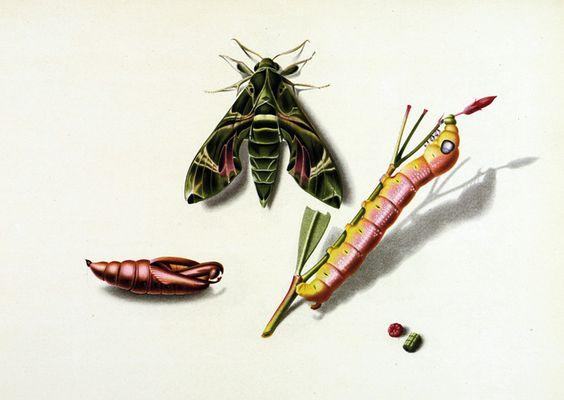 Niklaus Stoecklin, Schönheiten der Natur. Ein Bilderbuch. Mit 16 Original-Farblithographien von Niklaus Stoecklin. Erlenbach-Zürich, Rotapfel, 1943
