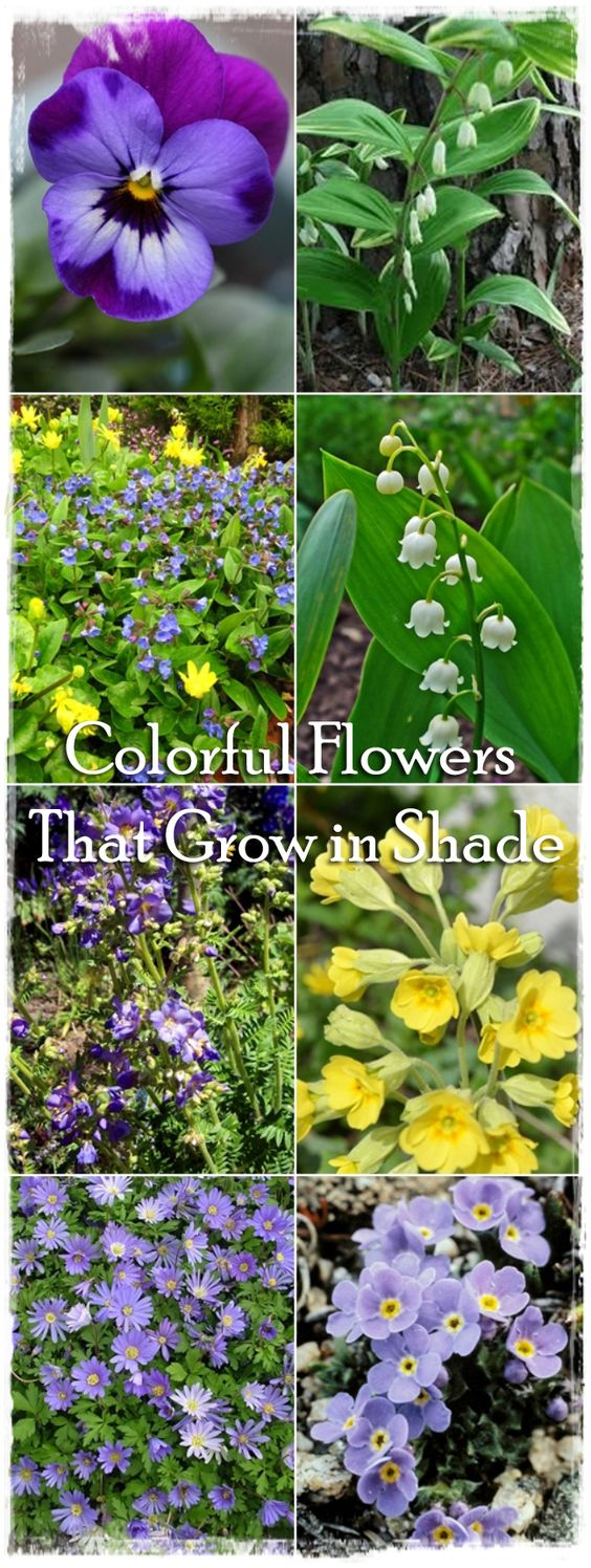 Description about the colorful flowers you can find in your garden and which grow in shade.