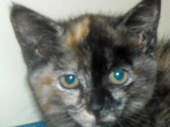 WAITING TO DIE.....Little Josie kitten lost and unclaimed at Animal Control! | Pet Expenses - YouCaring.com
