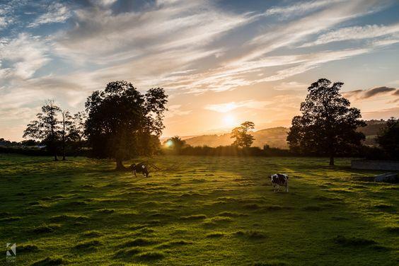El ambiente: Es en el rancho en Uruguay. En la llanura es muy silencio y tiene luz intensa. Sobre la campo muchos vacas estaba pastando.