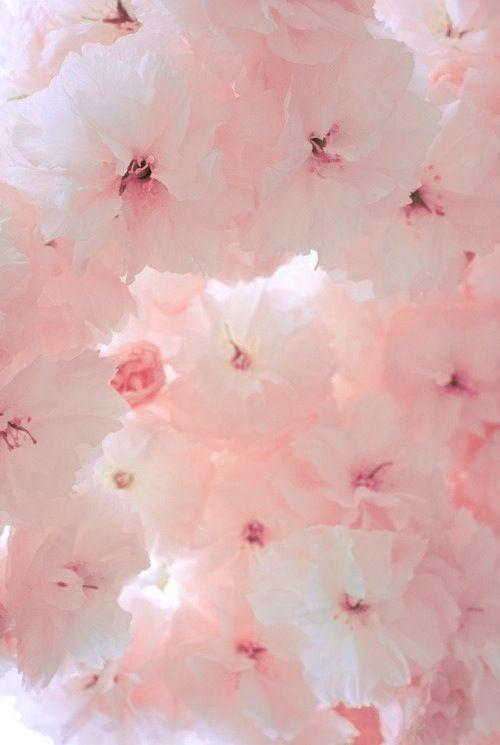 Las flores son la esencia de mi ser: