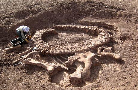 Excavate dinosaur bones.