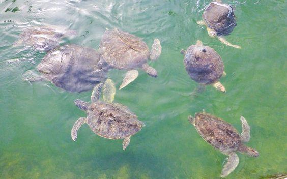 Die Schildkröten sind auf dem Weg der Besserung, um wieder in die Freiheit entlassen zu werden. © Viktoria Urbanek