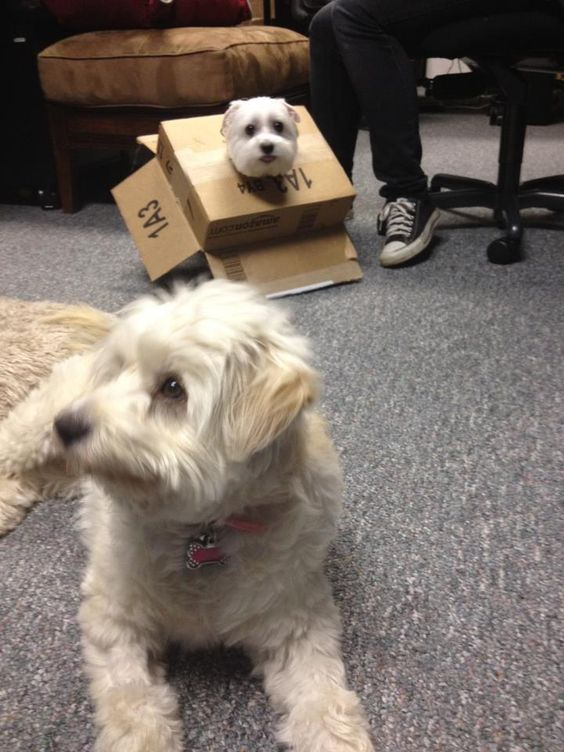 ...so we get bored at the office and put our dogs in adorable situations.