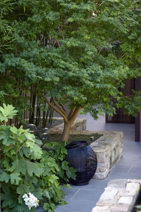 Courtyard gardens courtyards and gardens on pinterest for Courtyard landscaping sydney