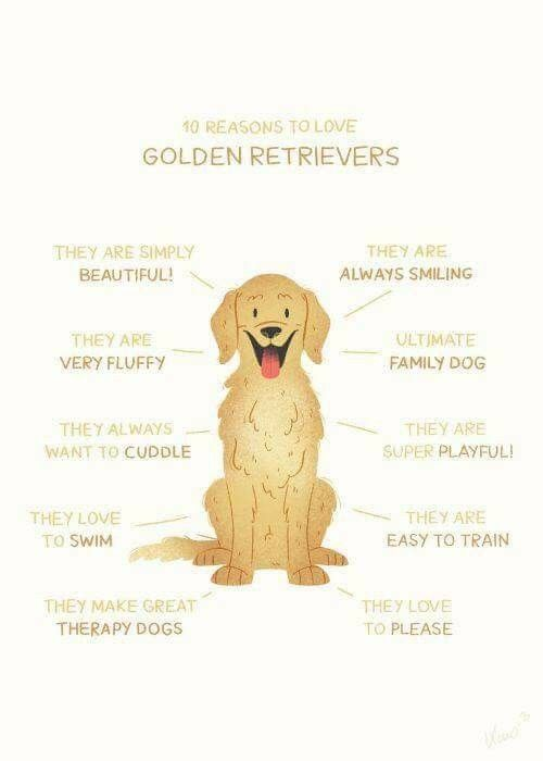 Idea By Joy Smith On Golden Retrievers Are The Best Golden