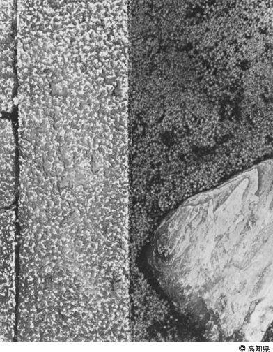"""Yasuhiro Ishimoto  portfolio """"Katsura"""" stone and moss (1954)"""