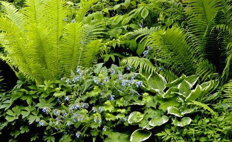Der Schatten Bluht Auf Schattenpflanzen Schattenpflanzen Garten Schattengewachse