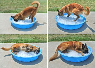 Doggy ice bath