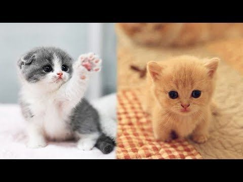 Cute Kittens Doing Funny Things 2019 3 Cutest Cats Youtube Cutest Kittens Ever Kittens Cutest Cute