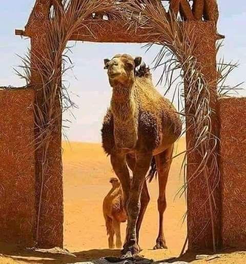إقرأ هذا الدعاء يحل مشـآكلك كيف ماكآنت واين ماوجدت ويعطيك ربي ماطلبت لومرة واحدة في عمرك دعاء مبارك الدعاء Desert Tour Morocco Tours Morocco