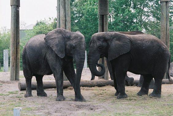 jacksonville zoo memorial day