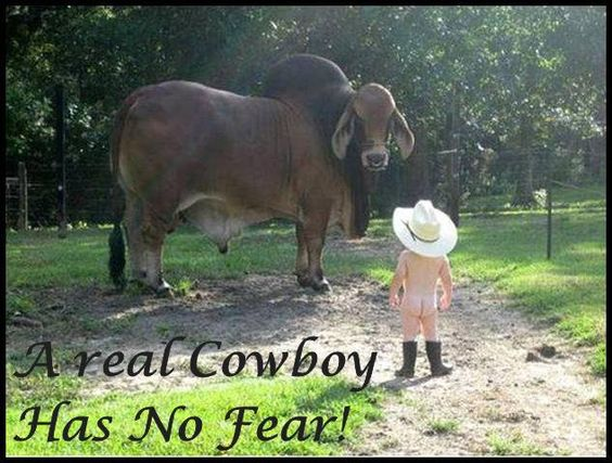 LiL Cowboy/That's it buddy. Stare him down!