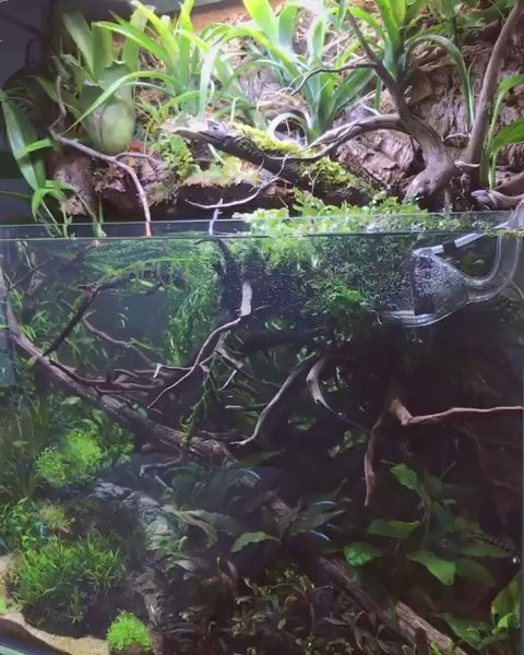 Rate This Tank From 1 10 Below Aquascape Aquarium Aquascape Aquarium Design