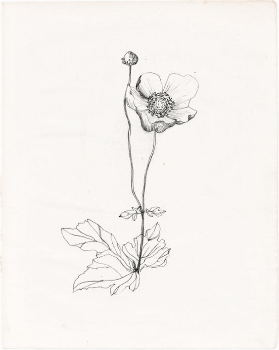 wildflower drawing | Tumblr | Drawing | Pinterest | Logo ...
