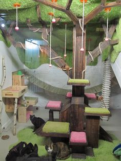 Cat play room                                                       …
