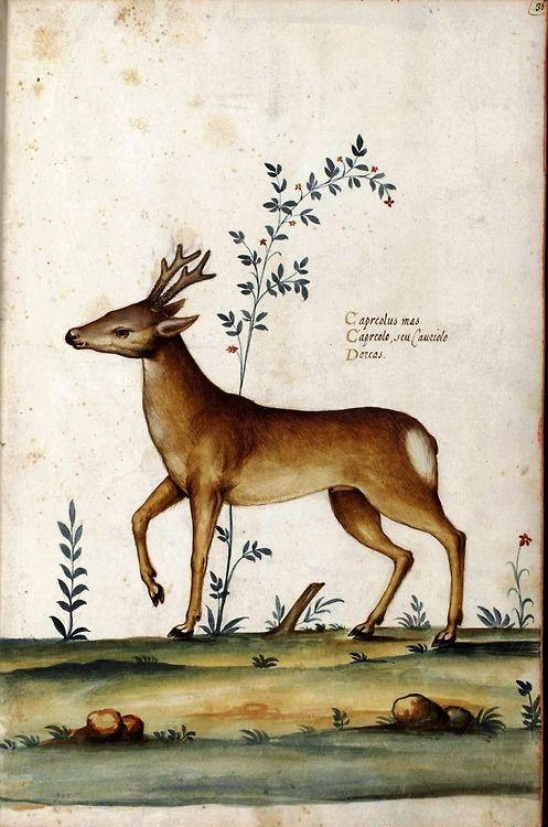 workman:  nihtegale: Deer by Ulisse Androvandi