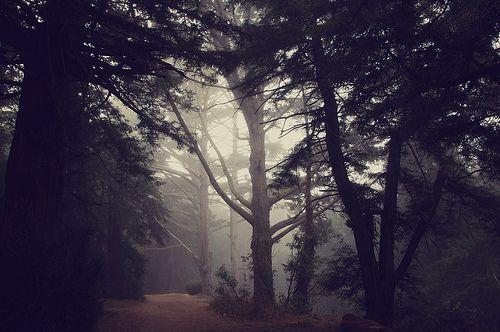 Foggy morning in Golden Gate Park
