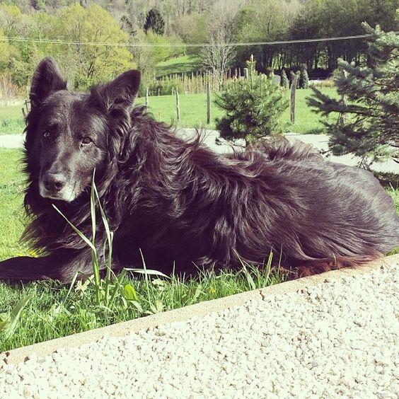 mllebibi My #cute #black #dog #wanimo #PerleNoire