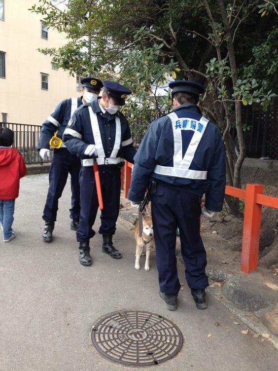 犬を保護する警察