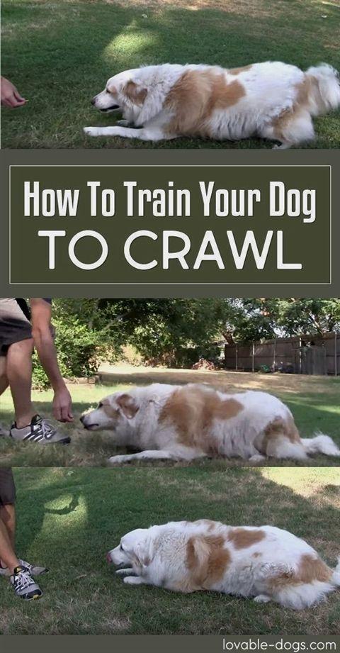 Dog Training Grass Patch Dog Training Zeeland Mi Dog Training