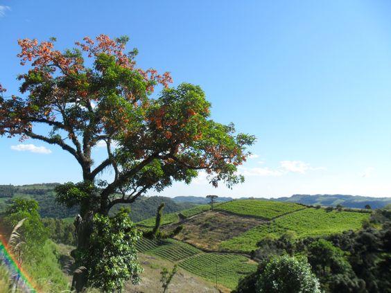No caminho para Cotiporã