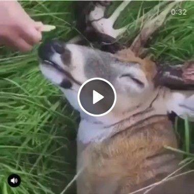 Esse animal está com tanto sono que nem pra comer acorda