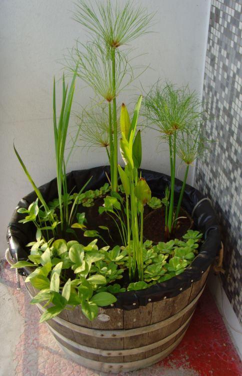 mini bassin dans demi tonneau mini bassin et plantes d. Black Bedroom Furniture Sets. Home Design Ideas